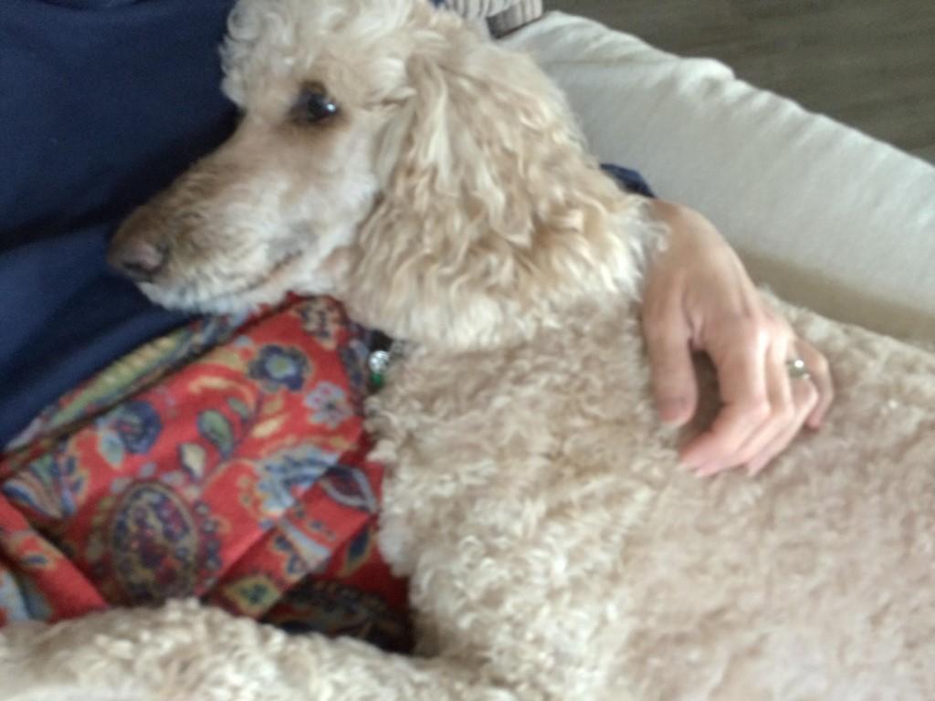 Medical Miracles – Lola's Story